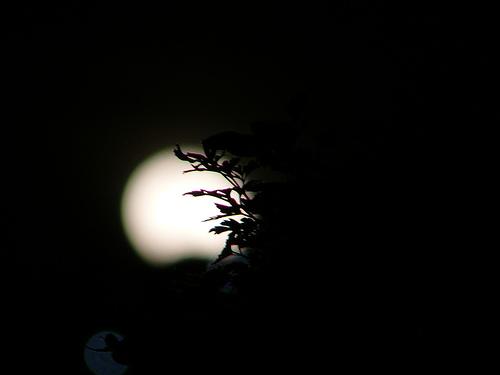 Aprendiendo a fotografiar en la noche; categorías y materiales
