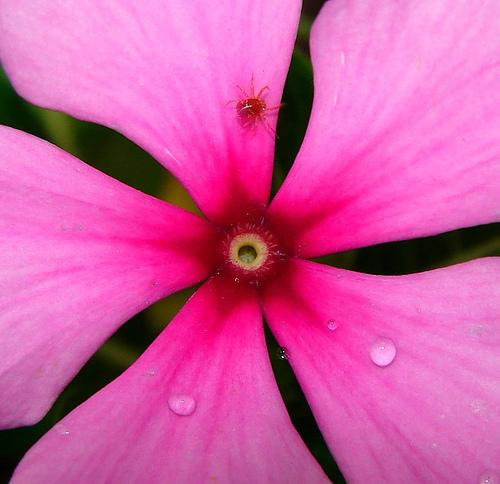 Fotografiando flores, consejos (I)