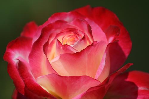 Fotografiando flores, consejos (II)