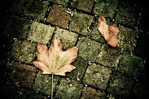 Consejos para hacer fotos en otoño (I)