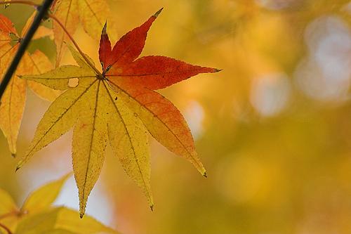 Consejos para hacer fotos en otoño (II)