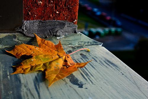 Inspiración para el otoño
