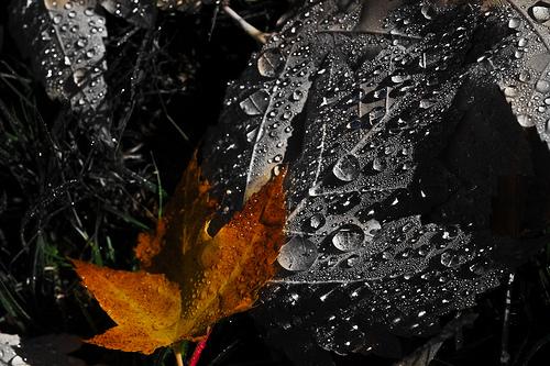 Fotografías para hacer en otoño