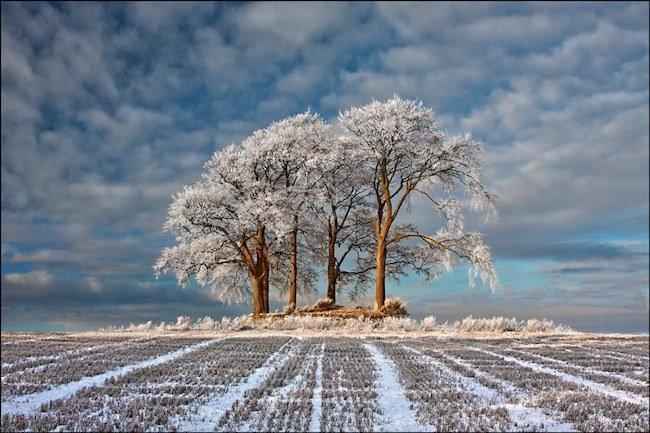 Robert Fulton, el mejor paisajista del 2011