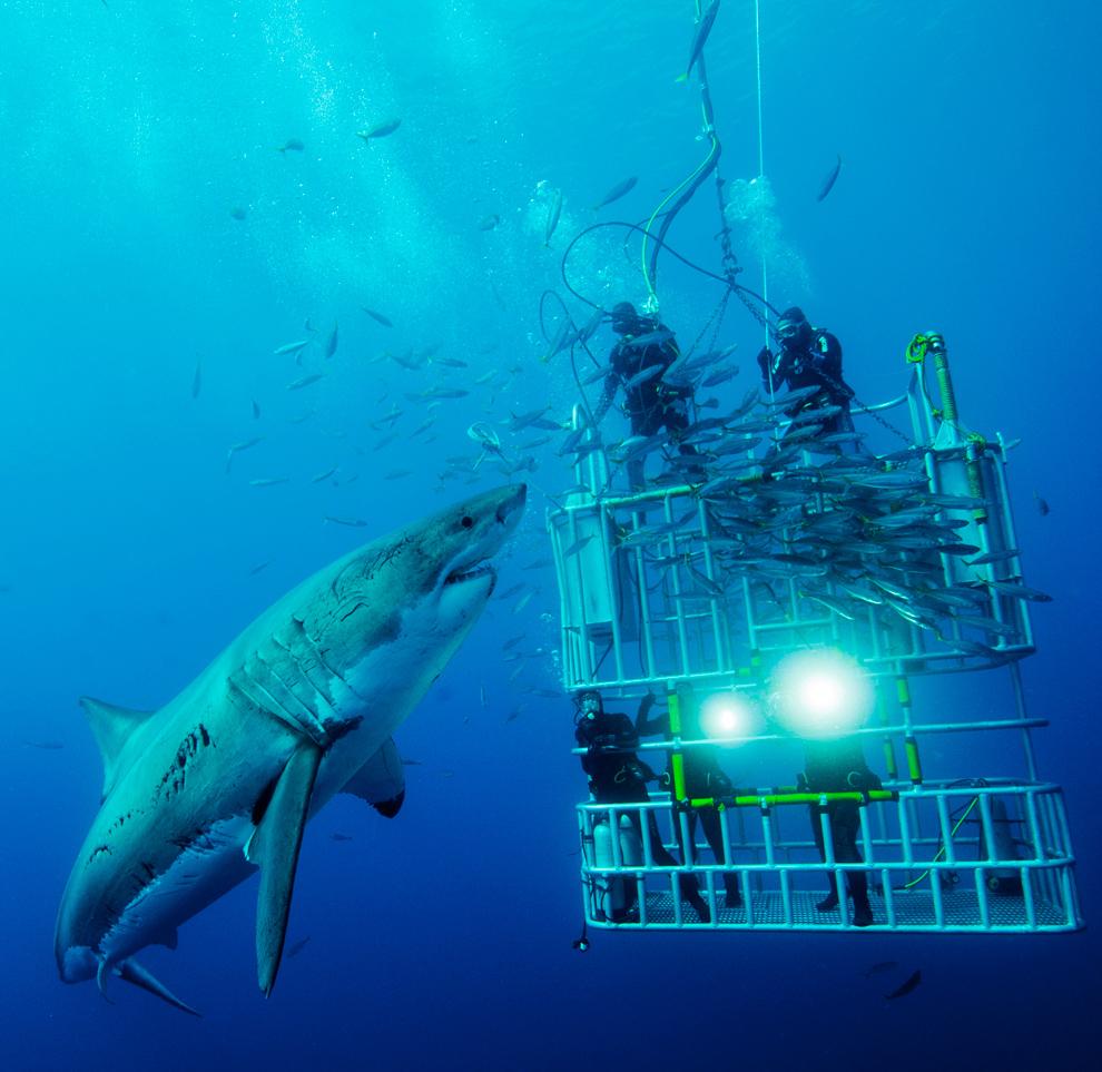 El National Geographic Photo Contest 2011 se cierra dentro de ocho días