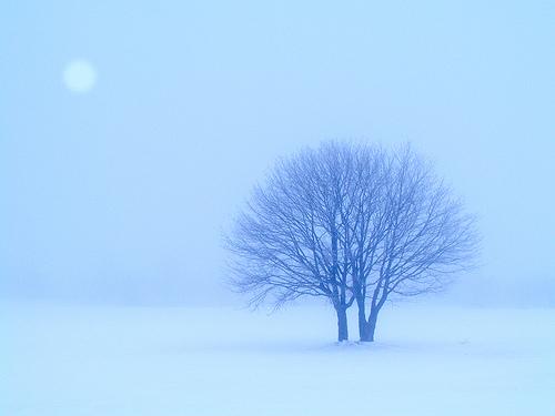 Consejos para hacer fotografías en la nieve (I)