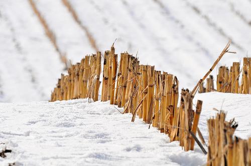 Consejos para hacer fotografías en la nieve (II)