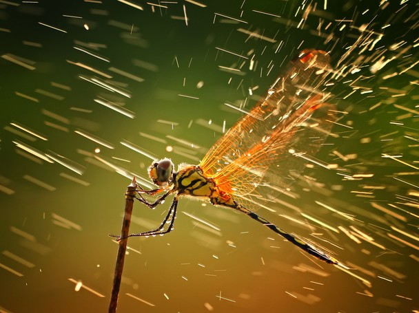 Aquí están los ganadores del National Geographic Photo Contest 2011