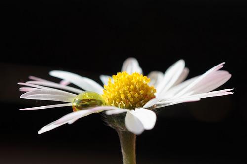Consejos para fotografiar en primavera