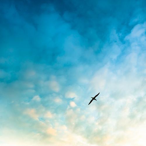 Consejos para la fotografía de aves (I)
