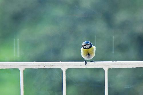 Consejos para la fotografía de aves (III)
