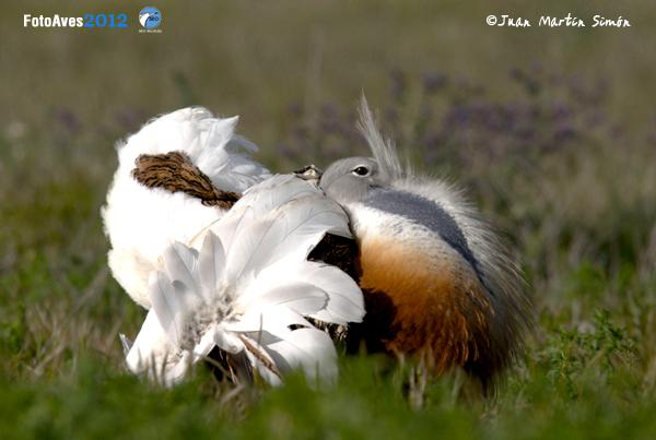 FotoAves, un concurso para los amantes de la naturaleza