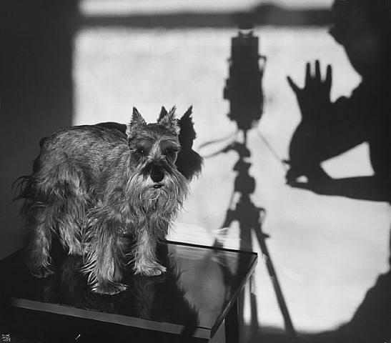 La fotógrafa de la semana: Ilse Bing