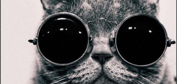 El gato encerrado: una serie de fotos que está dando la vuelta al mundo