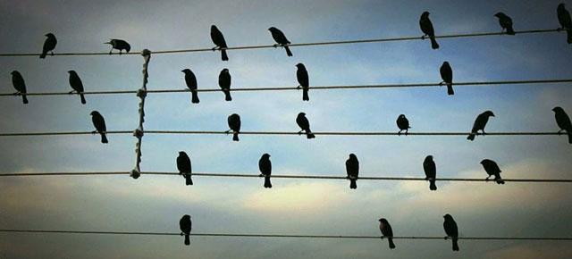 La fotografía de unos pájaros sobre cables eléctricos se traduce a una preciosa melodía