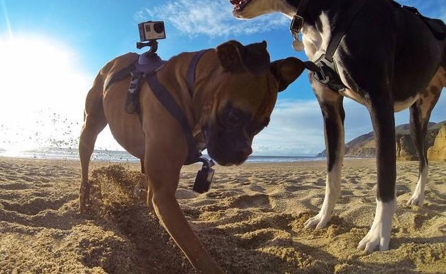 GoPro lanza un arnés para sujetar la cámara a un perro