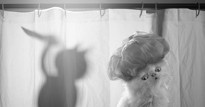Jesús Segura nos propone un proyecto fotográfico simpatiquísimo con Napoleon the Cat