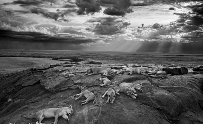 Michael Nick Nichols se hace con el Wildlife Photographer of the Year 2014